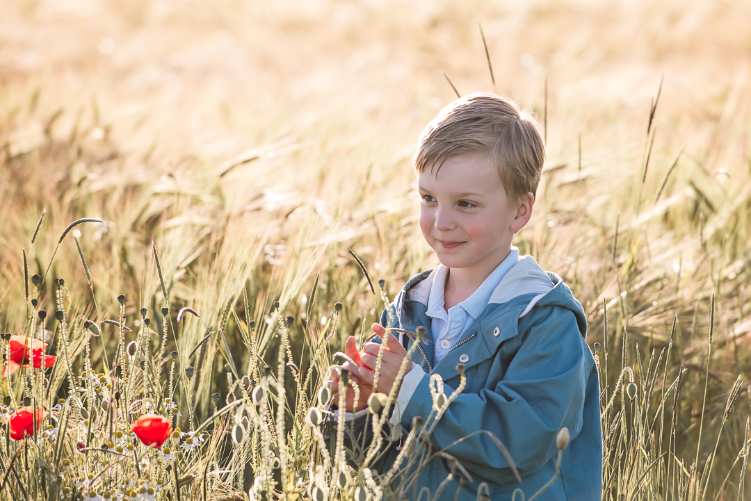 magic hour, midsummer magic little boy in barley field