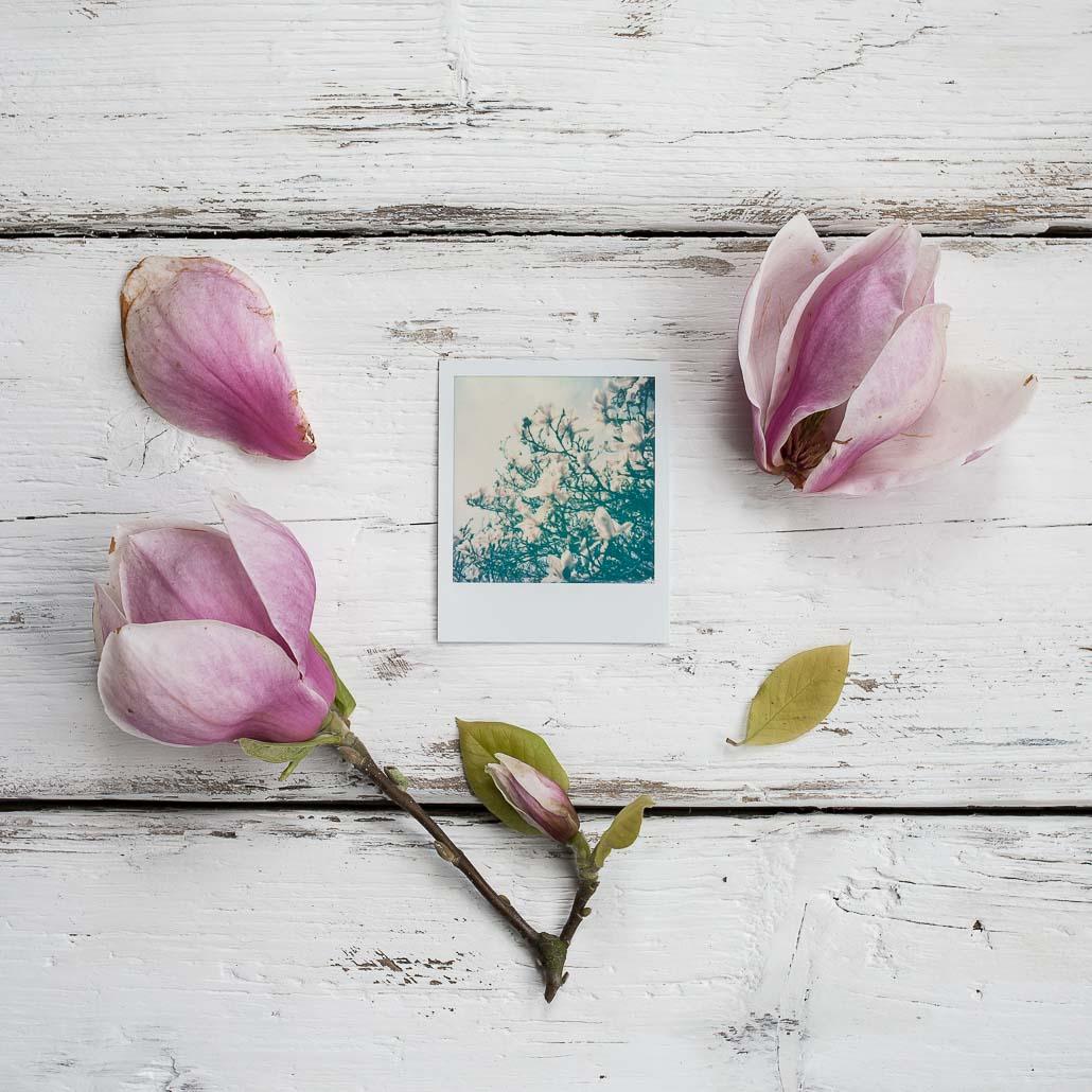 Polaroid instant film photography spring magnolia
