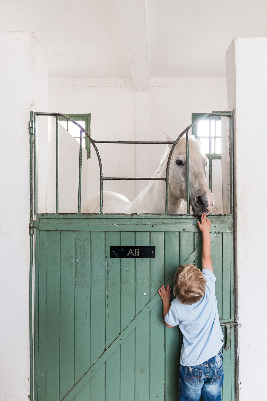 club med marrakesh, little boy and pony