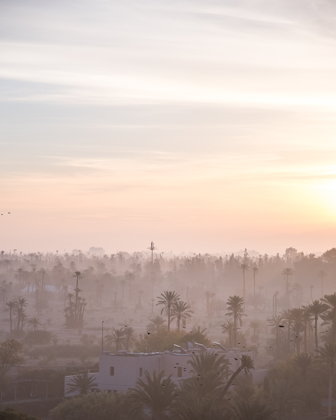 sun rise over marrakesh, as seen from the club med resort