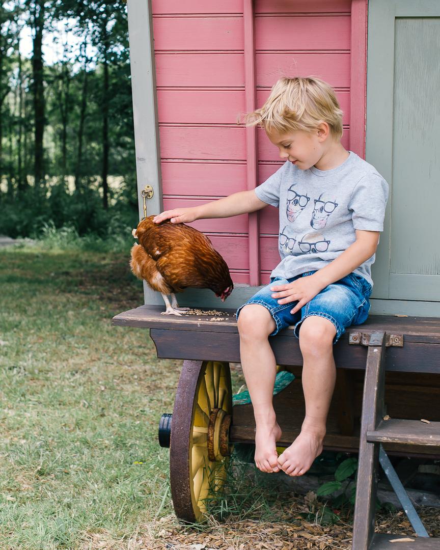 little boy feeding chicken
