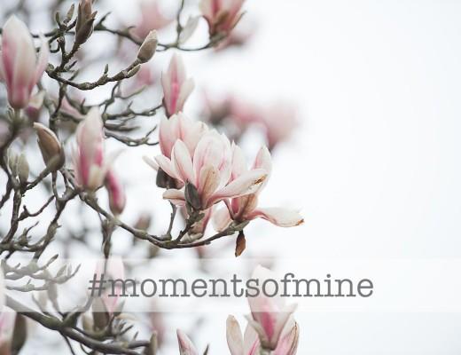 momentsofmine Spring Magnolia Pink