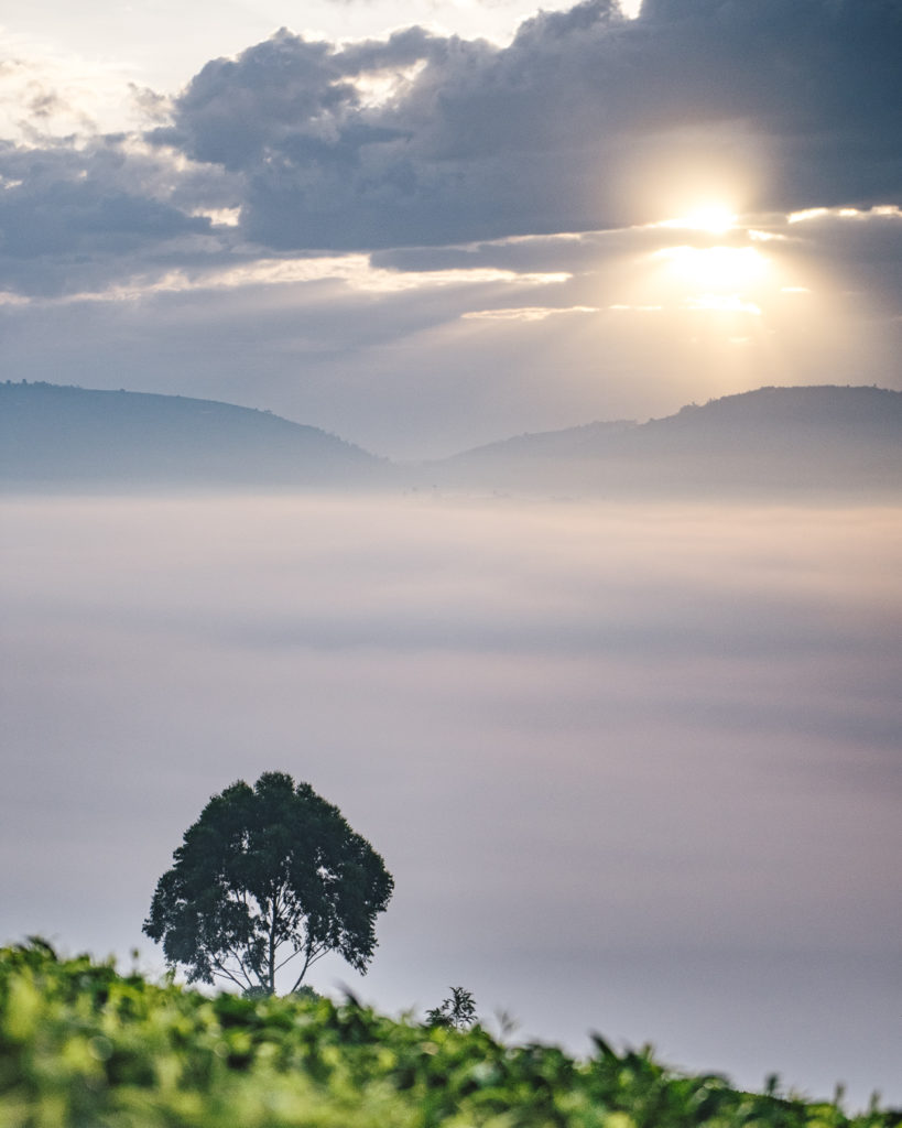 sunrise at Sorwathe tea estate