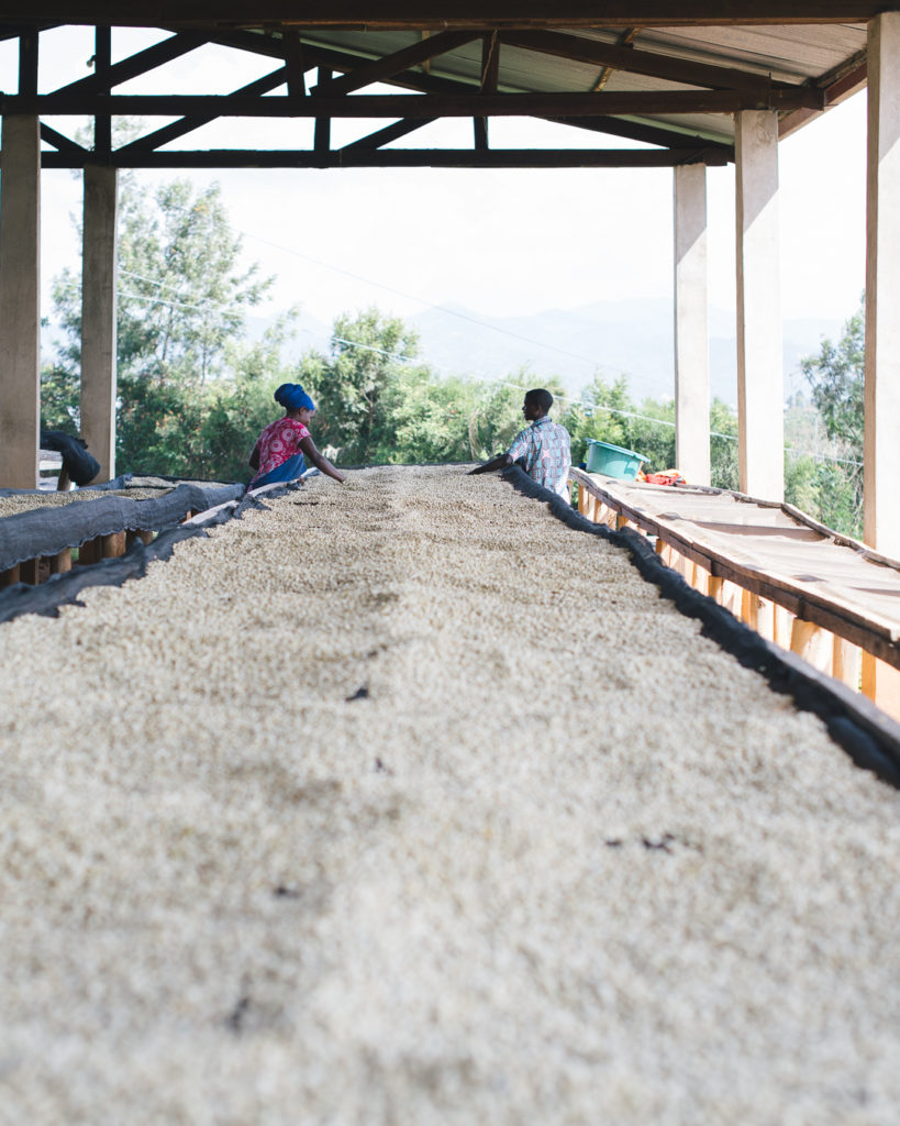Ejo Heza coffee collective Rwanda