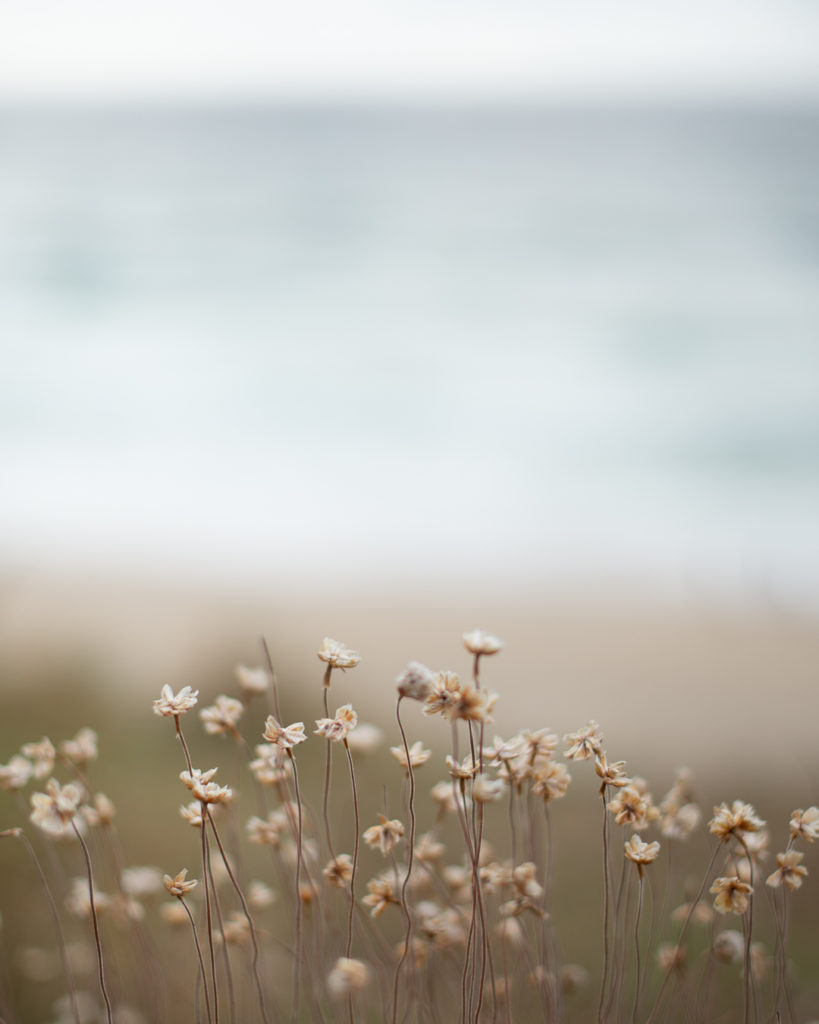 unedited raw file seaside flowers